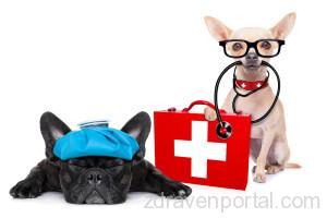 sick-dog-pic-1600x1067