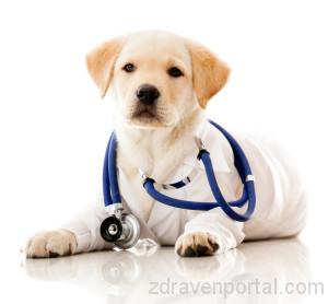 doctor_puppy