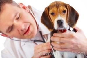 veterinary-doctor-in-bareilly-500x500